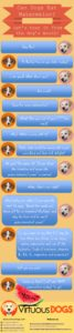Can Dogs Eat Watermelon Infographics