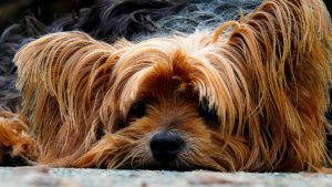 Virtuous dogs article 2