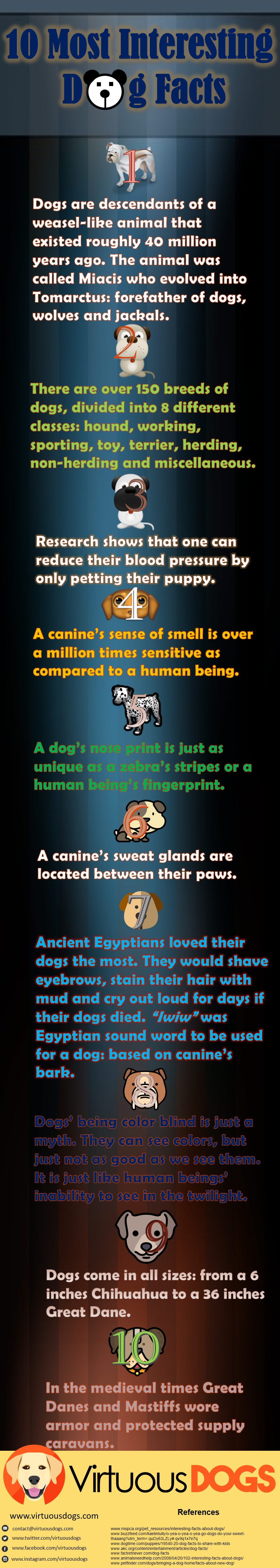 Dog-Facts-virtuous-dogs-infographics