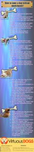 How to Train a Dog Virtuous Dogs Infographics