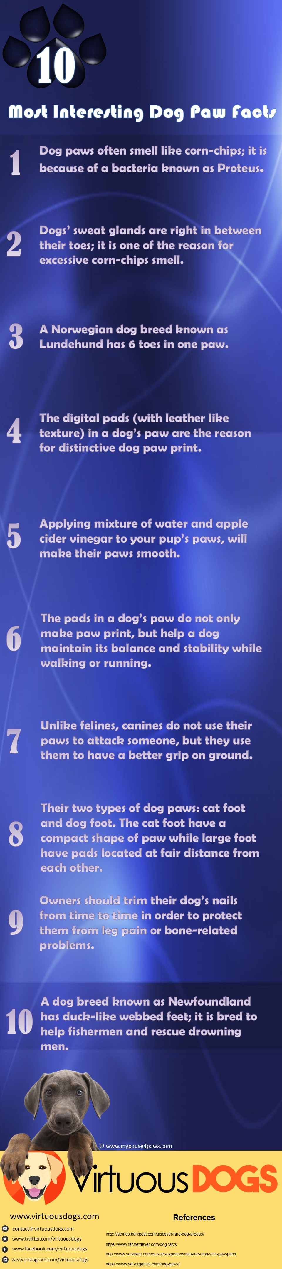 Dog-Paw-Infographics-Virtuous-Dogs