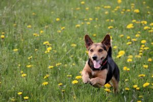Dog-Virtuous-Dogs (1)