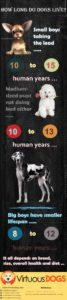 How long do dogs live
