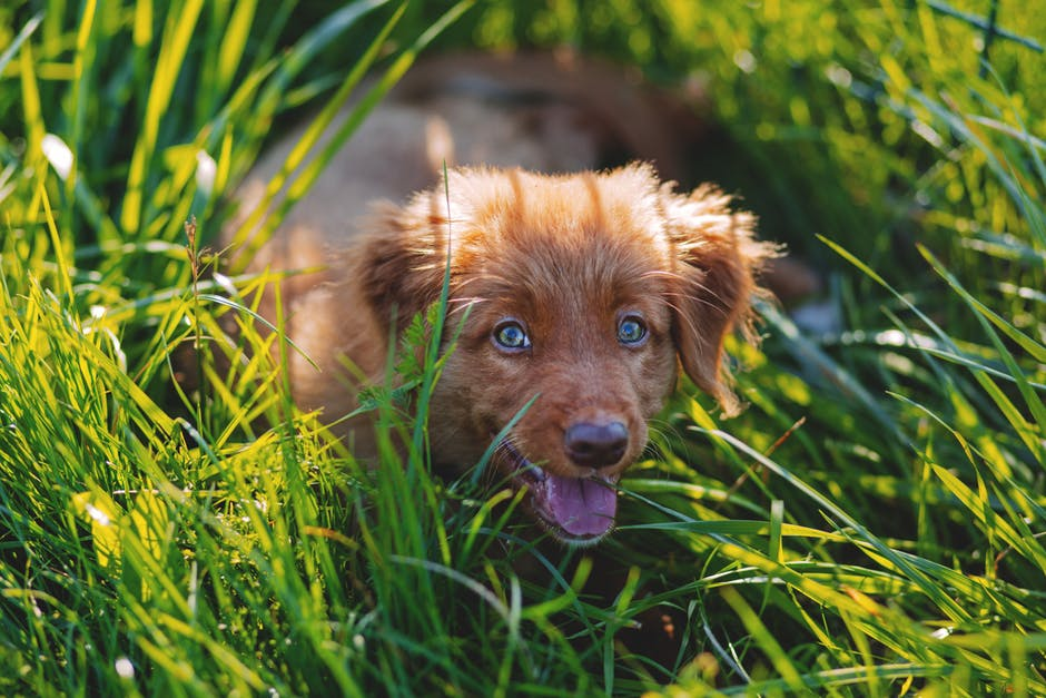 Why Do Dogs Eat Grass images 1