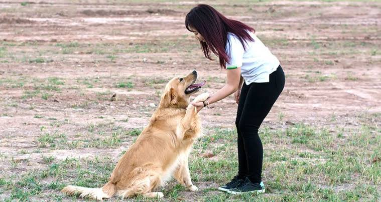 Process of training dogs to obey