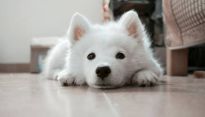 How to train your dog to focus with you?