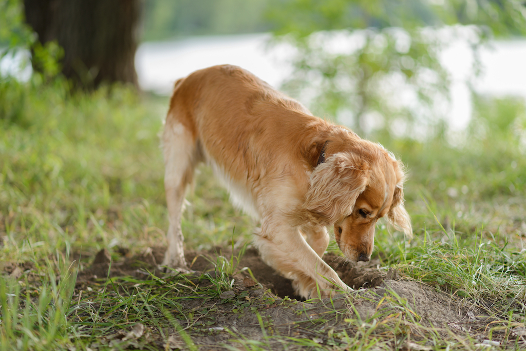 How to stop the dog from digging