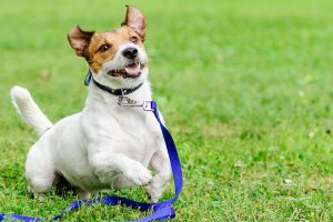 bladder problems in dogs