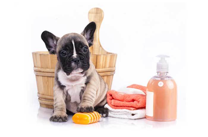 How to clean a dog without a bath: